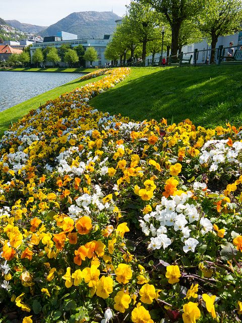 Spring in Bergen, Norway