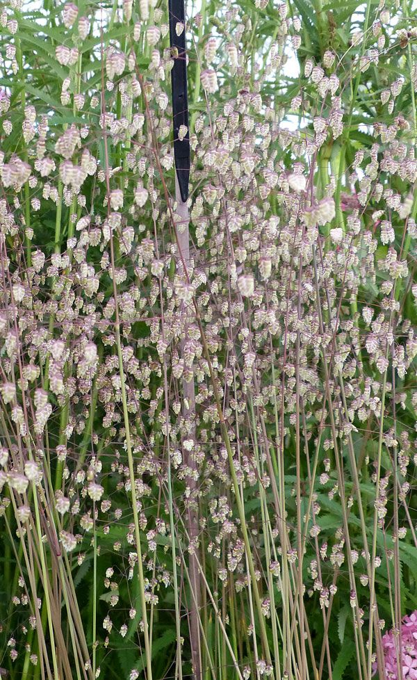 Nice The best plants to add texture to your garden design
