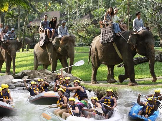 Bali Adventure Tours is well known for its top-notch facilities, such as the Elephant Safari Park & Lodge, where you can touch, feed and ride an elephant through the tropical jungle of Bali. Book your dream Balinese break online now at www.dreamdestination-holidays.com for great prices in Bali & worldwide! Holidays, travel, vacation, honeymoon, nature, adventure, Indonesia, Asia.