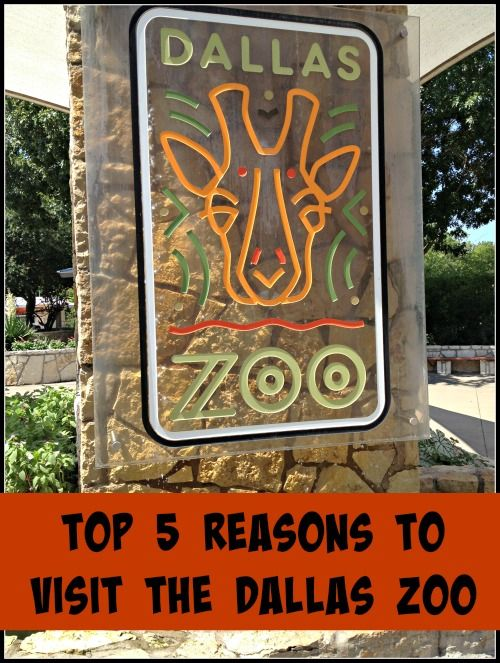 Top 5 Reasons to Visit the Dallas Zoo