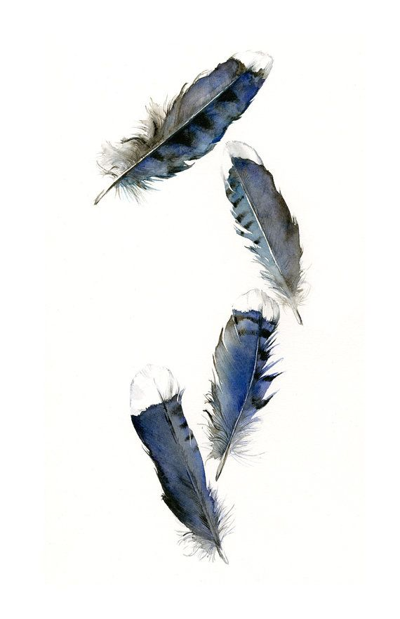 feather painting  watercolor feathers feather door amberalexander