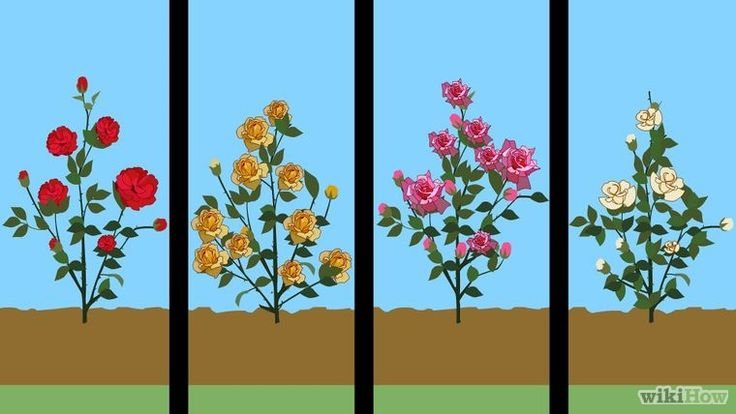 Prune Rose Bushes Step 3 preview.jpg