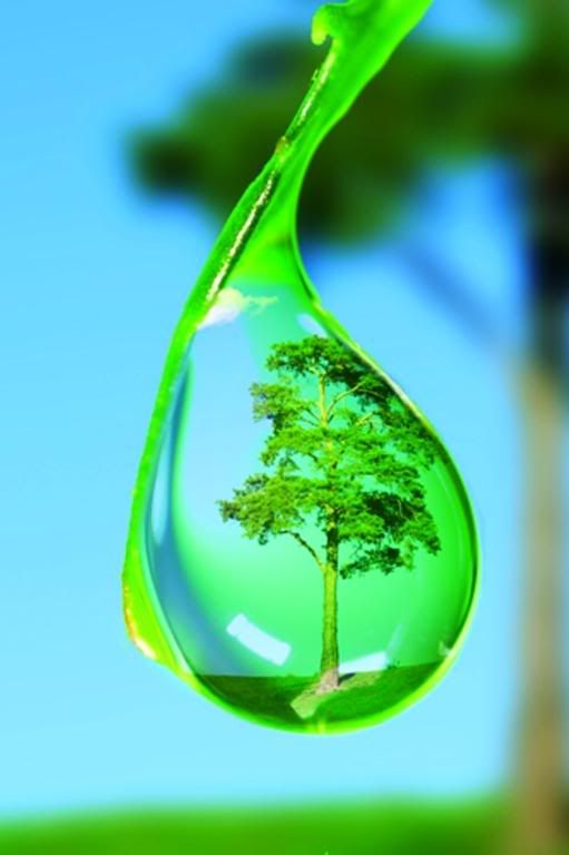 Tree in Waterdrop, posted by Dare_2_Dream_4ever's via s557beta.photobucket.com