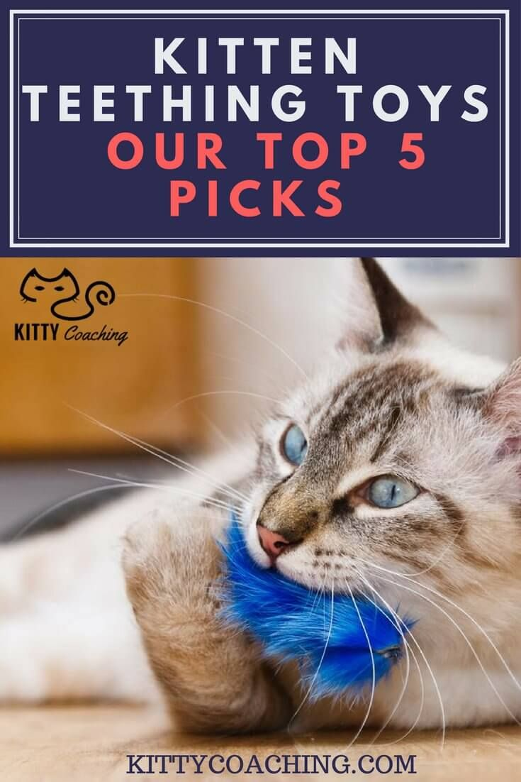 Kittens need to bite, but you don't want them chewing on your TV cables - that's where kitten teething toys come in!  http://www.kittycoaching.com/equipment/kitten-teething-toys/