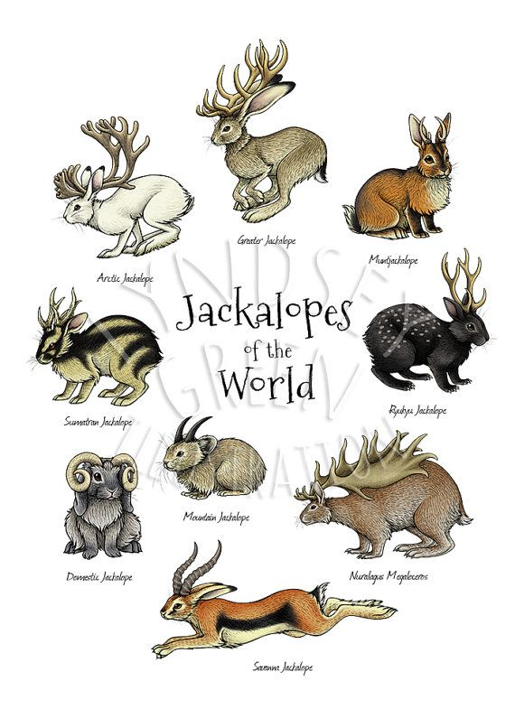 This is an A4 (29.7 x 21 cm) inkjet print of my original Jackalopes of the World illustration, from my Jackalopia zine. The Jackalopia zine explores the many different species of jackalope that have adapted to live in different climates all around the world, from the savannah to the Arctic tundra! The jackalope is a mythical creature from North American folklore, traditionally described as a jackrabbit with antlers. This inspired me to create lots of different kinds of jackalope that might…