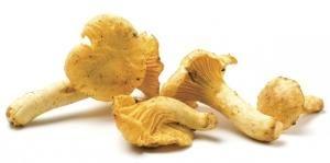 De CANTHAREL, ook wel hanekam of dooierzwam genoemd, is een trechtervormige paddenstoel. De kleur varieert van oranjegeel tot grijs. De steel is meestal heel kort. Cantharellen waren lang alleen 'wild' te plukken. Ze komen nog steeds in het wild voor, maar ze worden tegenwoordig ook geteeld. De cantharel is heel populair in Frankrijk en heet daar 'girolle'. De smaak is iets peperachtig.