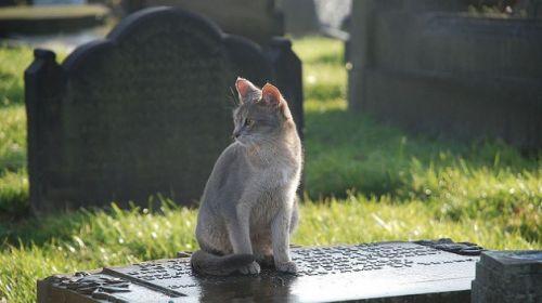 toldo-gato-tumba-500x2802#Este minino visita diariamente la tumba de su amo y le trae regalos,es fantastico!