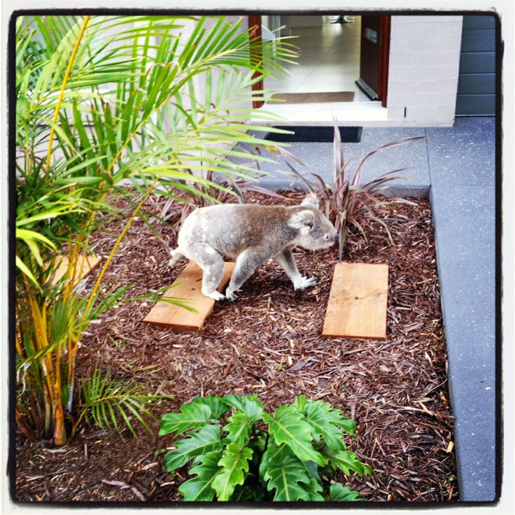 We welcome all creatures great and small at Escape at Nobbys.  How cute is this little guy?