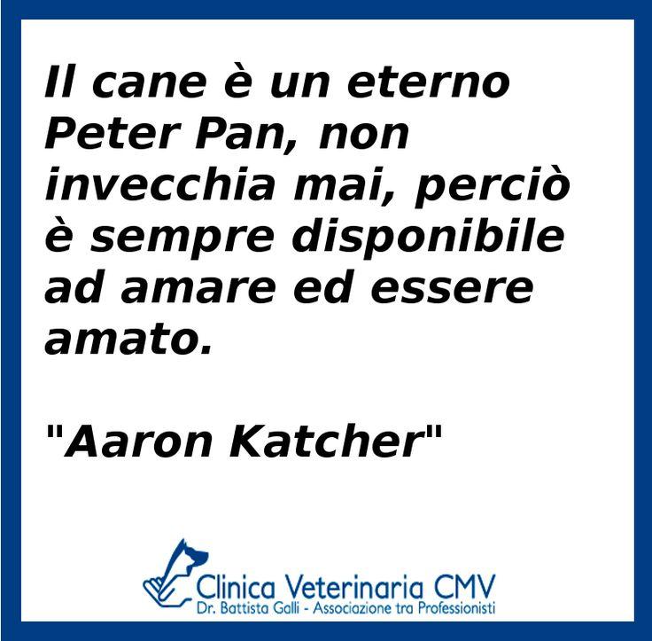 """Il cane è un eterno Peter Pan, non invecchia mai, perciò è sempre disponibile ad amare ed essere amato. """"Aaron Katcher"""""""