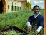 Harvesting lavender at Waterford Estate in Stellenbosch