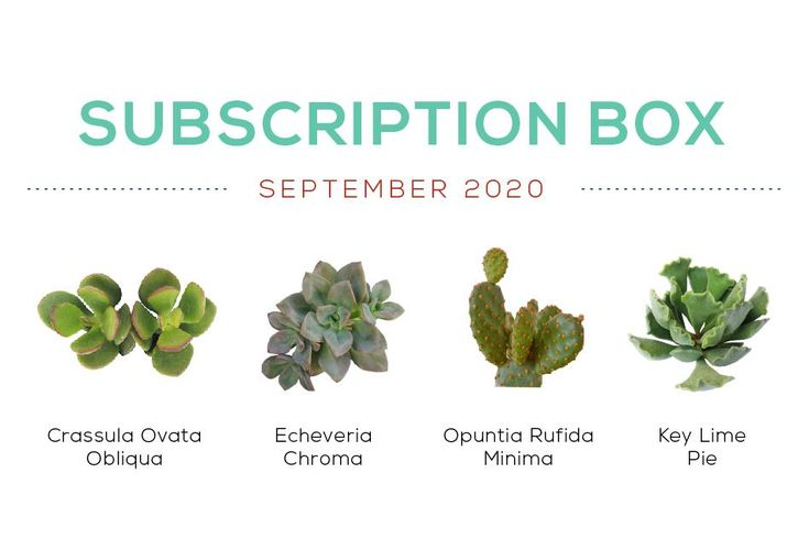 How and when you should bottom water yo ur succulents in