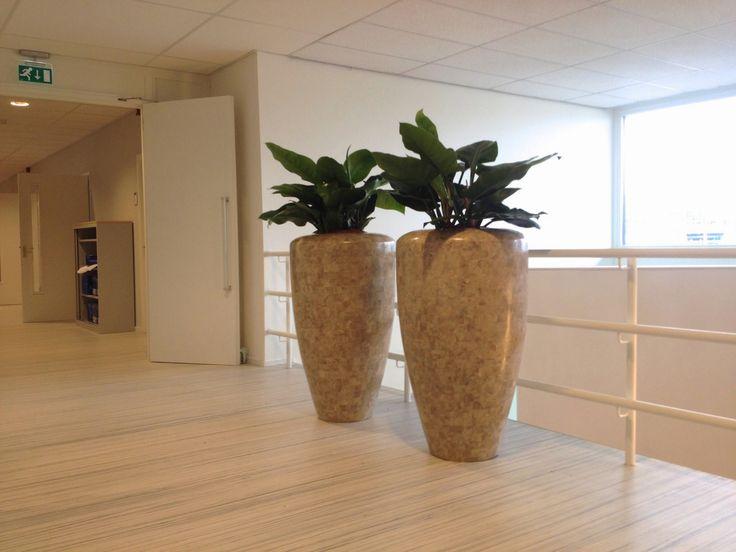 Hydrocultuur en seramis cultuur zijn professionele systemen om interieurbeplanting te verzorgen. Wij hebben specialisten in huis om uw binnengroen perfect te organiseren!