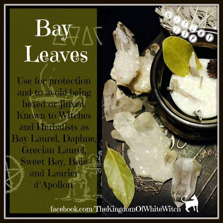 Bay leaves                                                                                                                                                                                 More