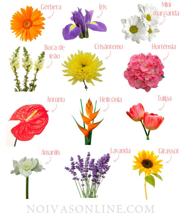 25 melhores ideias sobre nomes de flores no pinterest - Clase de flores y sus nombres ...