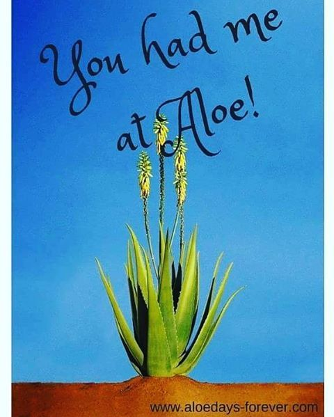 YOU HAD ME AT ALOE!  For all your aloe vera needs and small business opportunity visit www.aloedays-forever.com or facebook page…