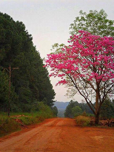 Paisaje típico de Misiones, con tierra colorada. Lo encontrará paseando por nuestra ciudad de Eldorado