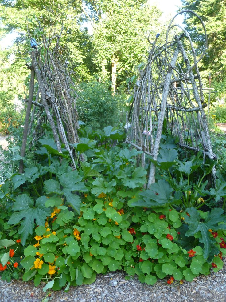 vegetable trellis ideas