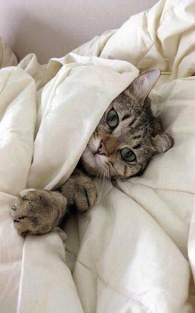 So cozy... #cats