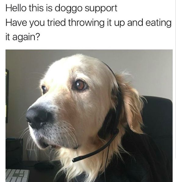 """""""Hello this is doggo support. Have you tried throwing it up and eating it again?"""""""