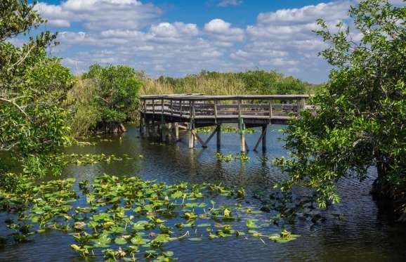 Things To Do In The Everglades National Park Travel Guide Beeloved City National Parks Trip North America Travel Destinations National Parks