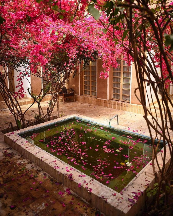 Deeply in love with this flowers  . . Location: Yazd - #Iran