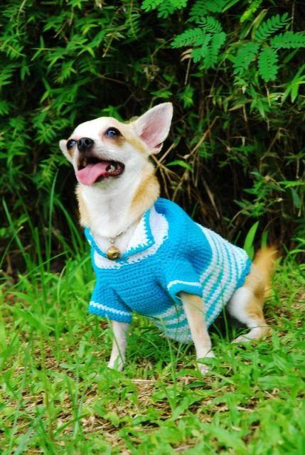 mavi köpek giysisi