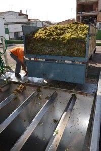 El contenedor vacía la uva en la tolva http://75centilitros.es/fotos-de-la-vendimia-2013-en-la-baronia-de-turis/