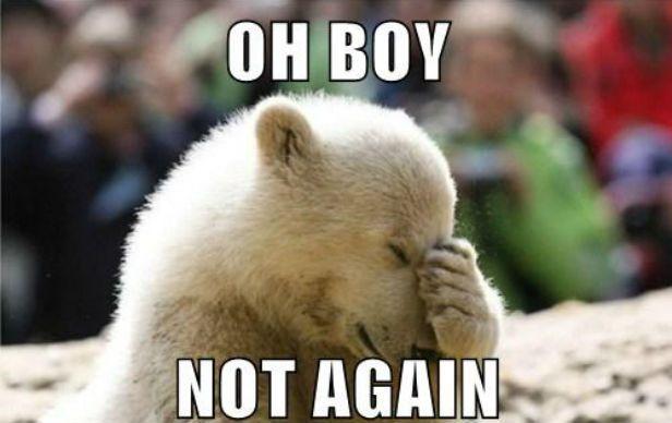 No need to repeat it - says the polar bear