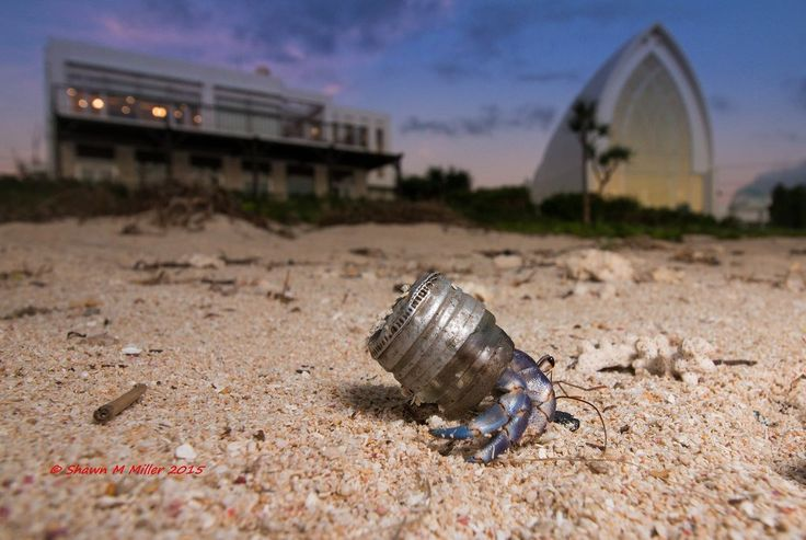 This photographer captures images of hermit crabs using trash as homes