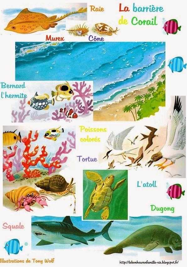 Le bonheur en famille: Géographie, la barrière de corail et la montagne...