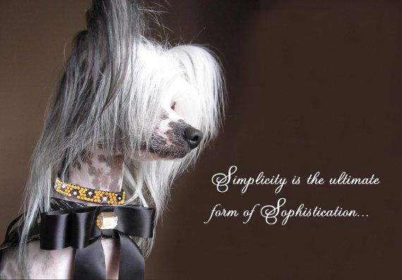 Dazzle your pup in Elegance and pure Glamour. Roxy and Lulu pet collars, crystallized with Swarovski elements.