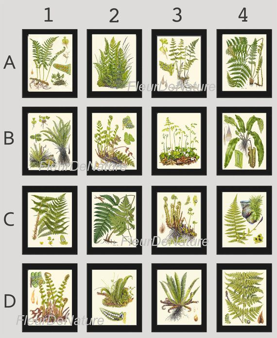 FERN Print SET of 16 Botanical Art Print 8X10 Lindman Antique Green Ferns Roots Chart Forest Summer Plant Nature to Frame Home Decor Garden