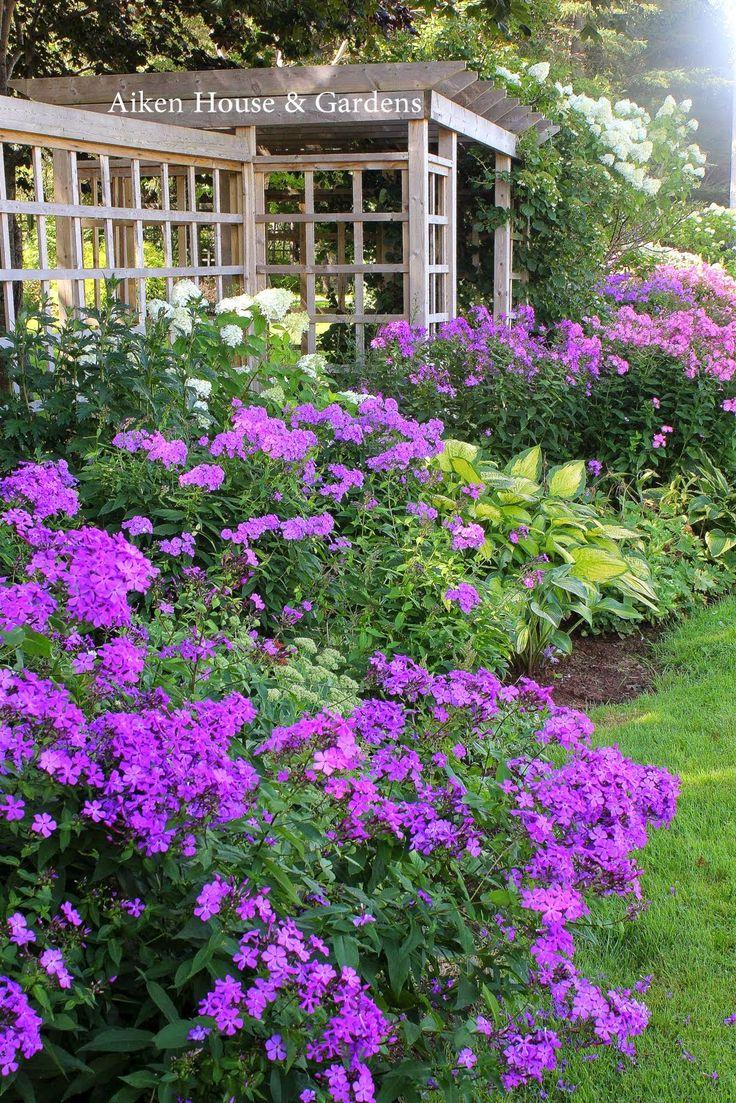 phlox, hydrangeas and hosta at Aiken House and Garden