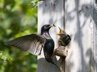 Ptaci v zahrade