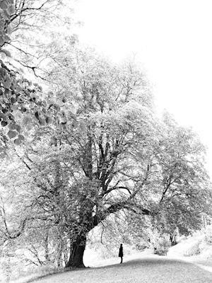 Susanne Kraft - The tree of life,  nature, black & white photo art, prints & posters