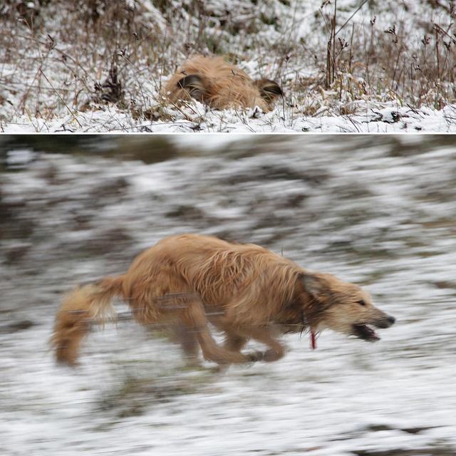 a dog who enjoyed snow by ariana_kozakowska