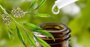 A levendula illóolaj mellett a teafa az egyetlen, amely – ellentétben a többi illóolajjal – mértékkel még akár közvetlenül a bőrre is kenhető. A kis üvegcsében...