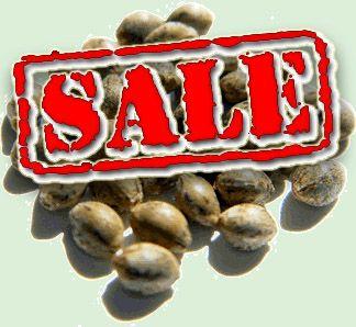 buy marijuana seeds online cheap http://www.growingmarijuanaebook.com/