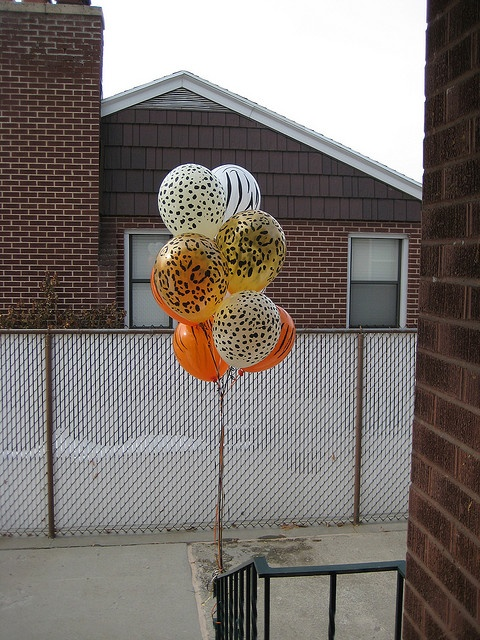 Animal print #balloons for a #Safari themed party. Fun!