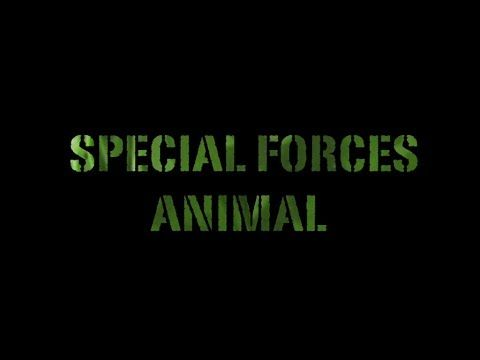 Special Forces Animal. The men and women of the special forces are recruited to help protect endangered animals.