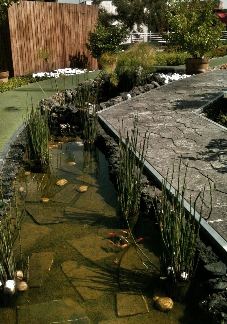 estanque de peces en azoteaverde de infonavit