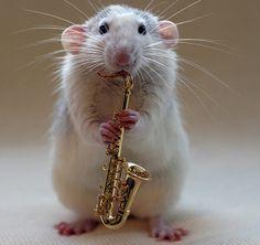 A Frikkin Hashtag: #AnimalTopTwentySongs part I