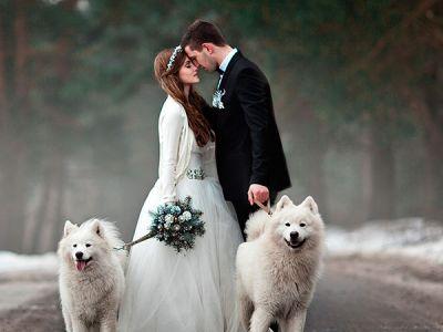 Wenn der Hund die Hochzeit filmt: Der beste Freund des Brautpaares als Kameramann!