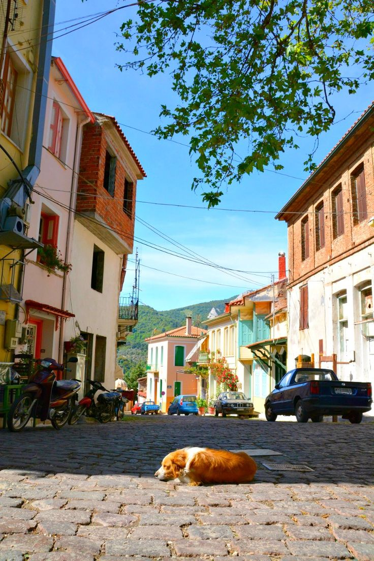 A dog takes a nap in the middle of a street in Agiassos village, Lesbos. A beautiful island town to visit in Greece.