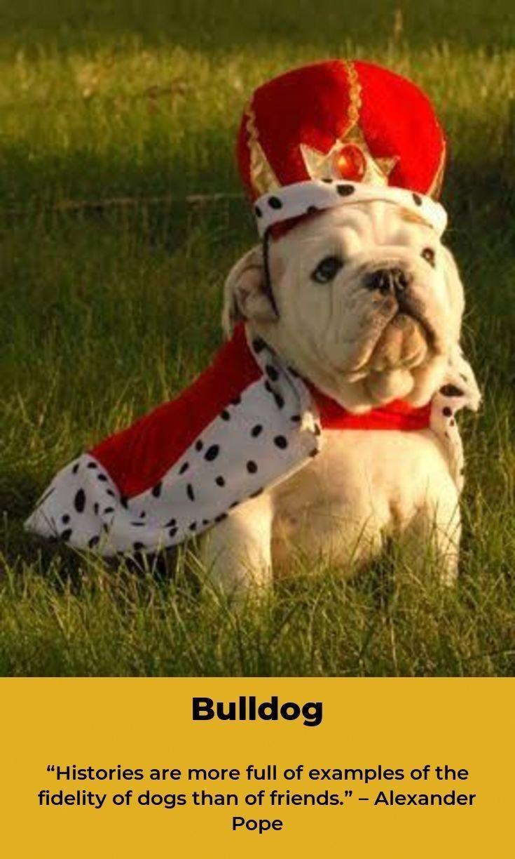 Bulldog American Bulldog French Bulldog Bulldog Puppies Bulldog