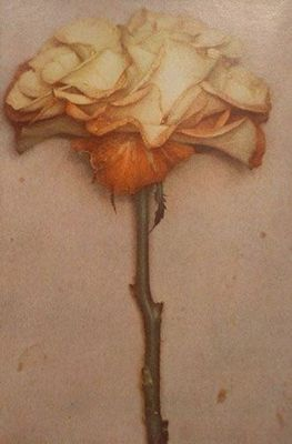 """From Life, 2001 (yellow rose), Fresson Print, 24""""x32"""", Signed."""