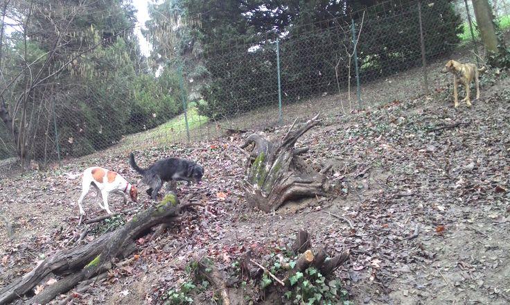 17/02/2016 - Torino con Dora e Lara