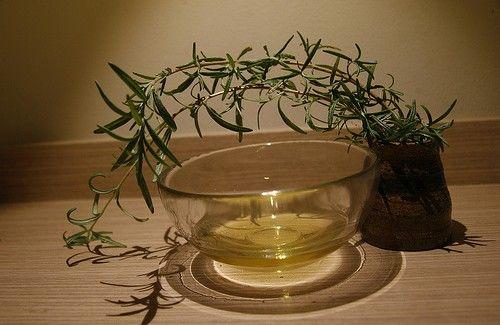 Uso terapeutico del aceite esencial del árbol del té en el acné.