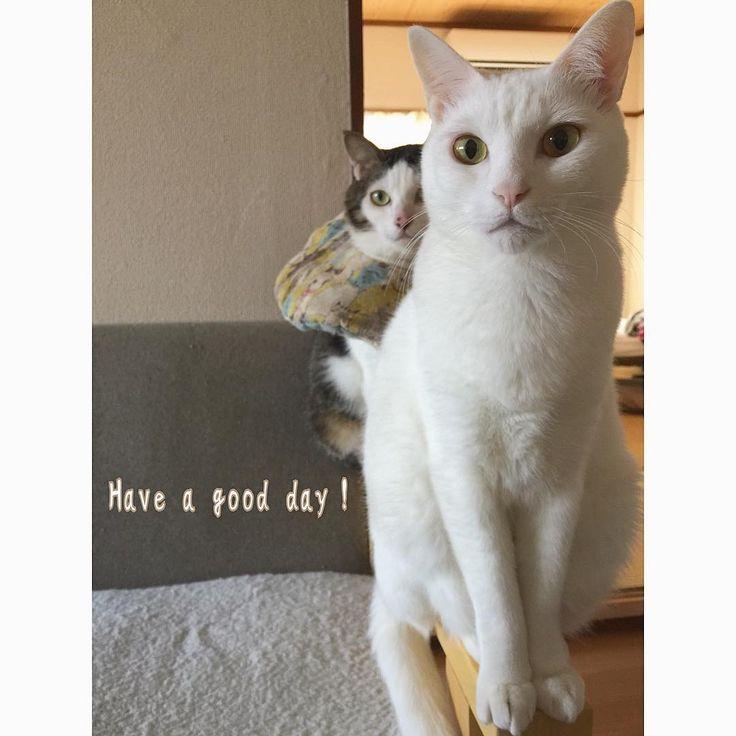 @toitoitoicat  元気にOpenしてま〜す🐾 お気をつけてお越し下さい✨ #toitoitoicat #きっとうまくいくミニマムプロジェクト #伊丹市 #チャリティーイベント #ねこ部 #cat #ねこ #八おこめ