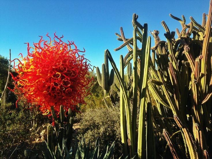 4061 Best Images About World Of Glass Chihuly On